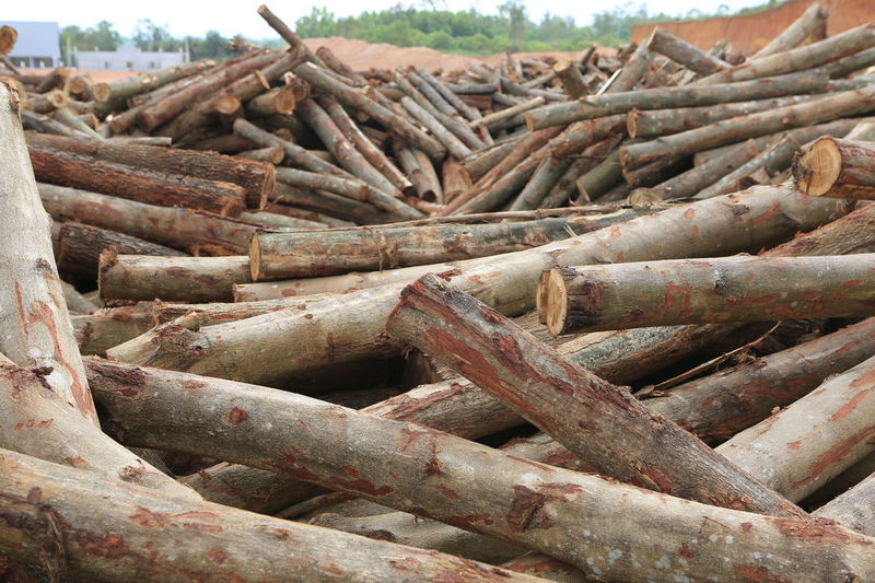 Acacia Acacia Tree Vietnam Abundance Close-up Day Heap Large Group Of Objects Logs Nature No People Outdoors Pile Rusty Stack Timber