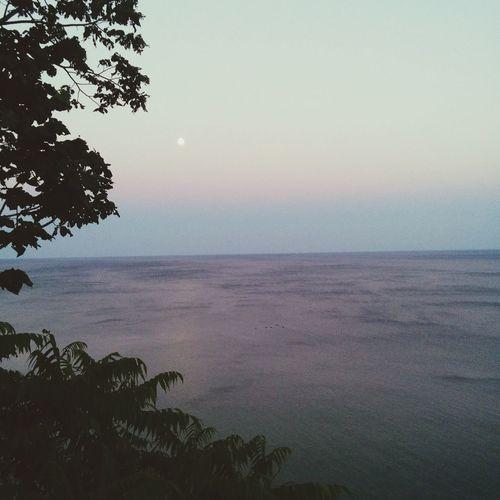 Moon Enjoying