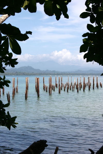 Somewhere along the east coast of Costa Rica. Costa Rica Beauty In Nature Birds Clouds Day Growth Mountain Nature No People Outdoors Peaking Through Scenics Sea Sky Tranquility Water