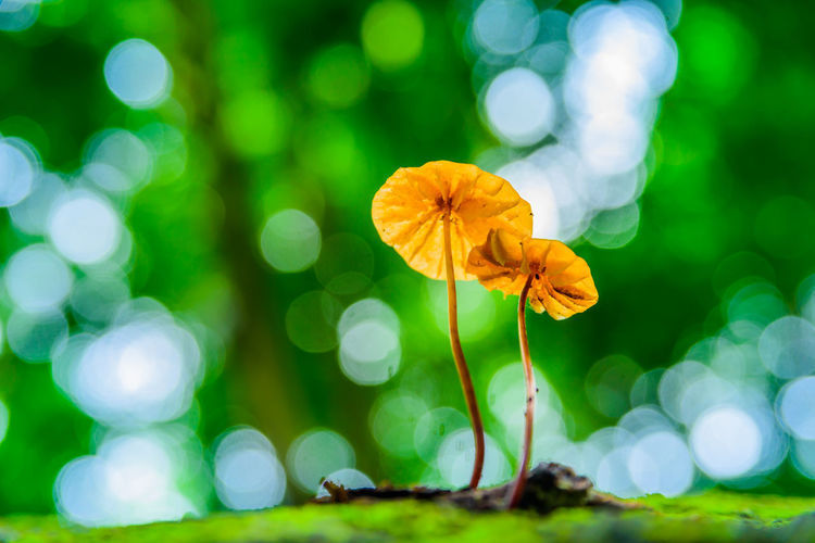 golden mushroom with beautiful bokeh Bokeh Mushroom Forest Green Small Outdoor Flower Head Flower Defocused Leaf Nature Reserve Beauty Summer Social Issues Ethereal