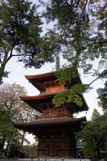 Gotokuji Temple Tree Plant Architecture Built Structure Low Angle View Building Exterior Building Spirituality Nature Branch Religion
