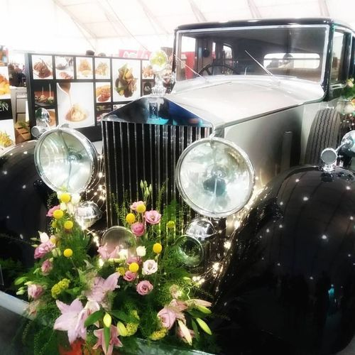 Car Day Indoors  Luxury Nature No People Plant Posh Rolls Royce Vintage Cars Vehicle Automobiles