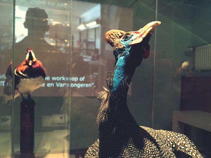 Stedelijk Museum Amsterdam Drawing ✏ Bird Photography Bird Study Ella Mae