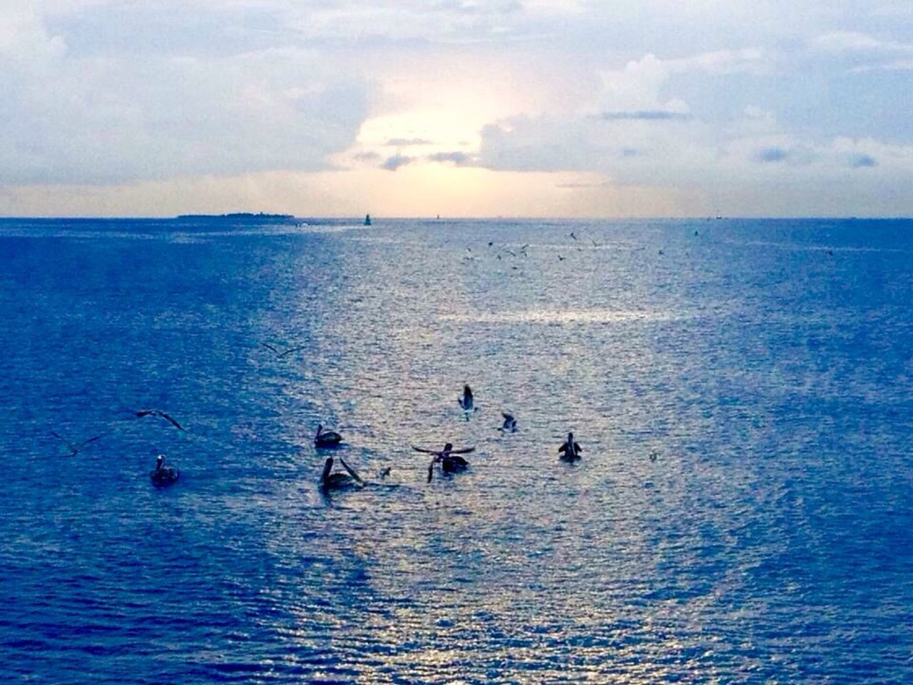 sea, water, horizon over water, nature, scenics, sky, beauty in nature, blue, waterfront, outdoors, cloud - sky, tranquility, real people, day, animals in the wild, men, sunset, togetherness, bird, paddleboarding, people