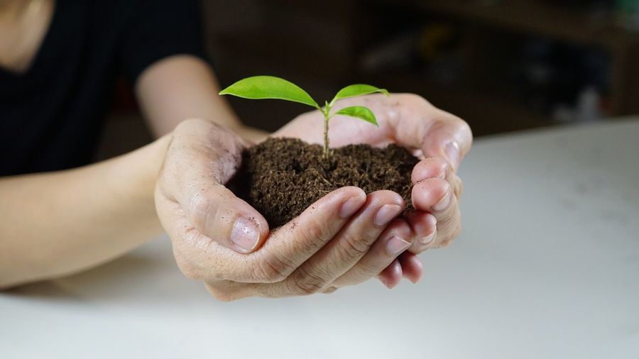 Human Hand Growth Plant Leaf Holding Focus On Foreground Seedling Human Body Part Close-up Beginnings Indoors  One Person Nature New Life Real People Sapling Fragility Agriculture Freshness Day