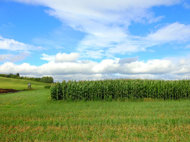 Agriculture Beauty In Nature Cloud - Sky Day Environment Field Grass Green Color Growth Land Landscape Nature No People Non-urban Scene Outdoors Plant Rural Scene Scenics - Nature Sky Tranquil Scene Tranquility