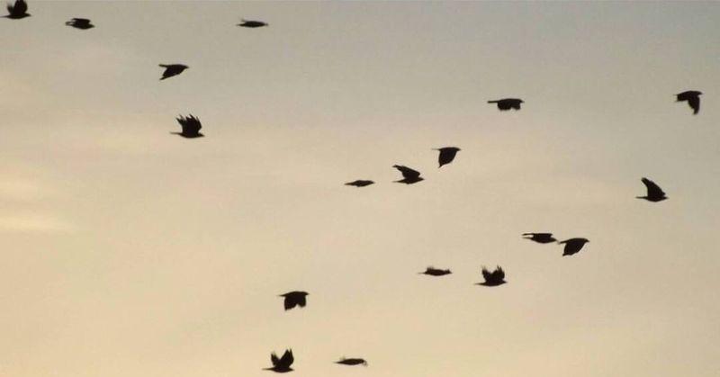 Birdsflyinghigh Dusk Wildlife