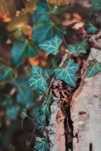 High angle view of ivy growing on tree