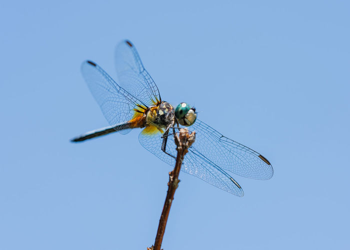 Close-up of dragonfly on twig against blue sky
