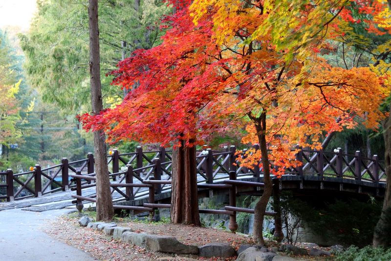Tree Autumn Change Plant Nature Beauty In Nature Orange Color Growth Day Park Tranquility Plant Part Leaf Tranquil Scene No People Outdoors Railing Built Structure Park - Man Made Space Scenics - Nature