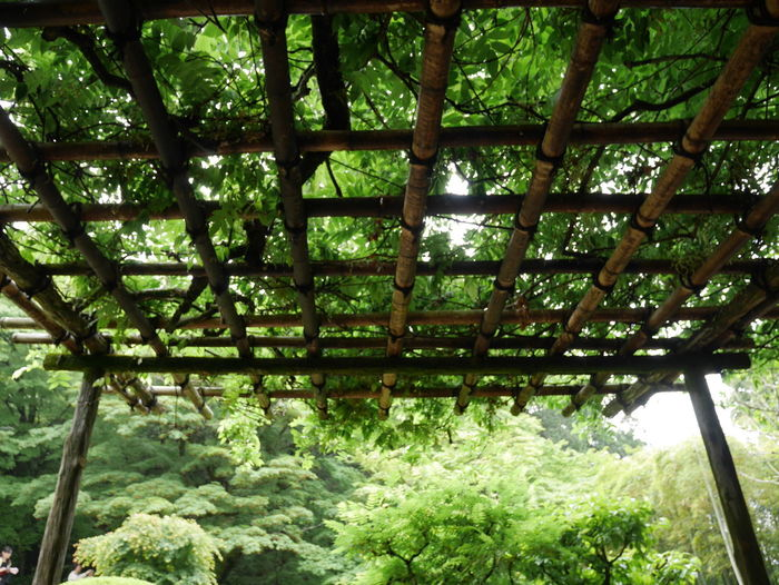 Lattice Green Japan Photography Japanese Garden Beauty In Nature Green Color Kyoto Low Angle View Nature No People Outdoors Plant Plant Part Tree