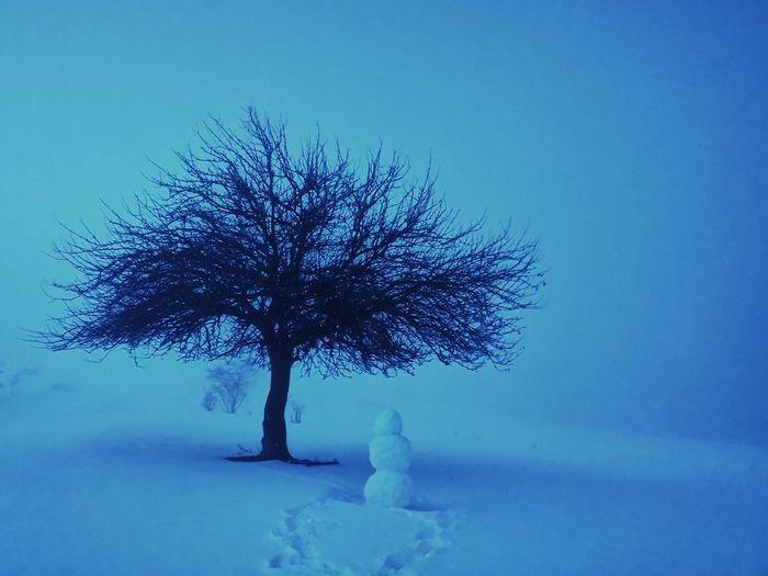 Snow Fog Tree
