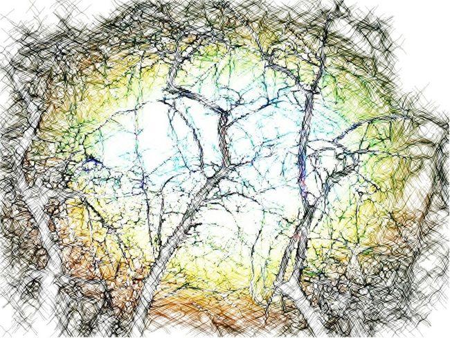 TreePorn Trees Superphotoapp Sketch