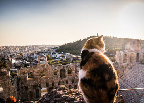 Cats are everywhere in Greece. They know all the good photo spots! Acropolis Acropolis, Athens Architecture Architecture_collection Athens Greece Athens, Greece Cat Cats Cats Of EyeEm Cats 🐱 Catsoftheworld City Parthenon Parthenon Acropolis Greece Ruins Ruins Architecture The City Light