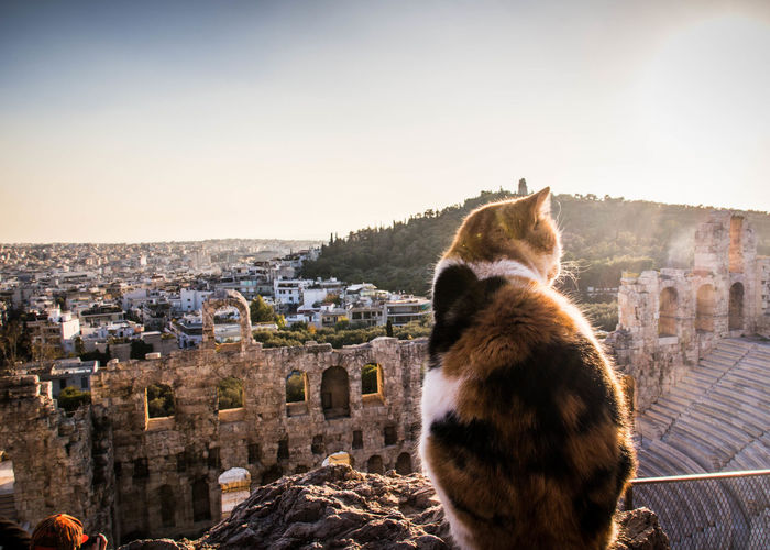 Close-Up Of Cat On City Against Sky