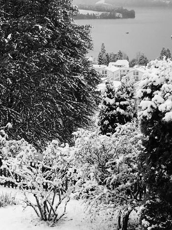 """""""Sometimes it snows in April"""" - Prince Songtext Landscape Check This Out Hello World EyeEm Nature Lover Snow Tree Garden Blackandwhite Spring Winter Confused My View From My Point Of View Switzerland Cold Nature April Clouds No People Day EyeEm Best Shots Landscape_Collection Outdoors Outdoor Photography"""