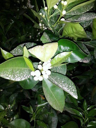 :) Nature Tagsforlikes Like4like Spring