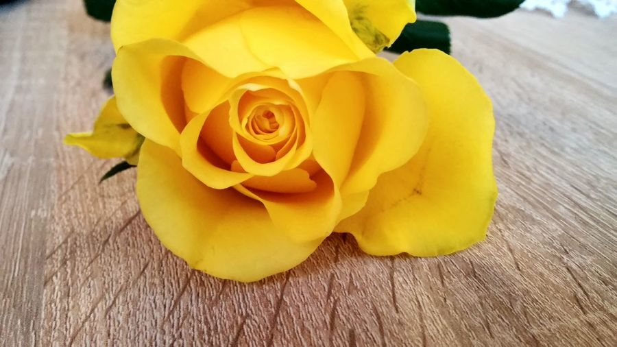 Artistic Picture Yellow Color Rose Collection On The Table Romantic Flowers Love Flowers Beautiful