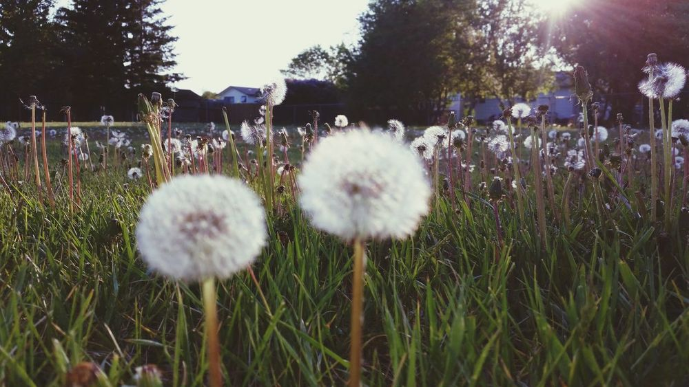 Relaxing Enjoying Life Hello World Dandelion Puff Antsveiw Tinyworld Cellphone Photography