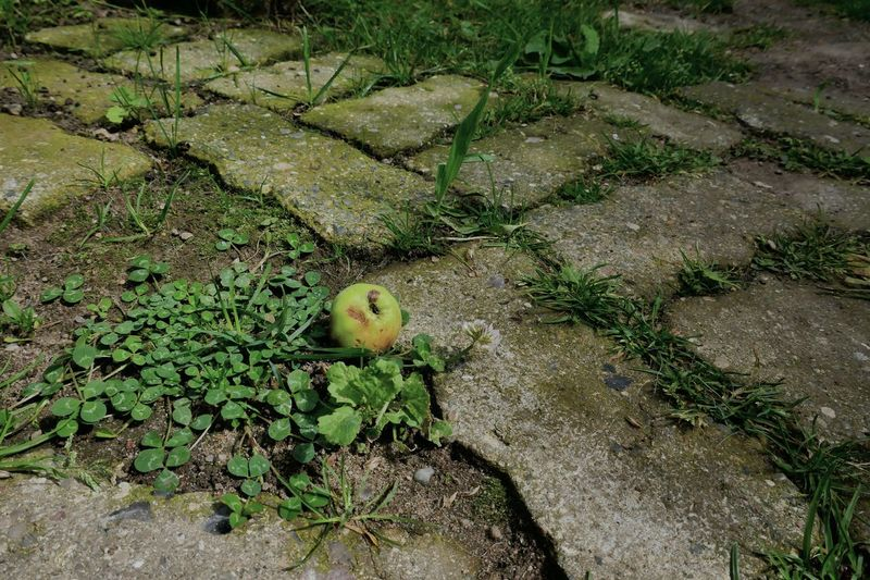 Ground Nature Nature On Your Doorstep Seat Apple Stones Fell Down From My Point Of View Taking Photos Green Color Clover Grass No People Day Outdoors StillLifePhotography Nature's Diversities Beauty In Nature Growth Check This Out