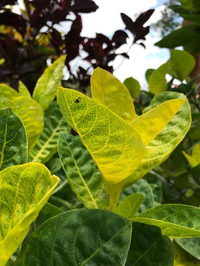 Paint The Town Yellow Leaf Green Color Close-up Plant Growth Nature No People Day Outdoors Yellow Color Beauty In Nature Fragility
