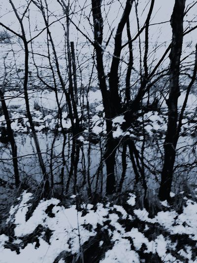 Tranquil Scene No People Snow Cold Temperature Winter Nature Weather Tree Beauty In Nature Tranquility Outdoors Day White Color Frozen Scenics Landscape Branch Sky Icecristals EyeEm Ready