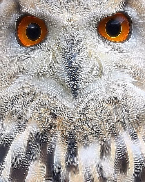 Skyler 💕 SiberischeOehoe SibiricusEagleOwl Eagleowl Owl EyeEm Nature Lover Bird Photography EyeEm Birds Birdsofprey Eye4photography  EyeEmBestPics