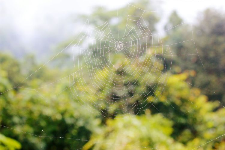 Nature Beauty In Nature Growth Green Color Spider Web Close-up No People Plant Outdoors Fragility Tree Day Willow Tree Web Spider