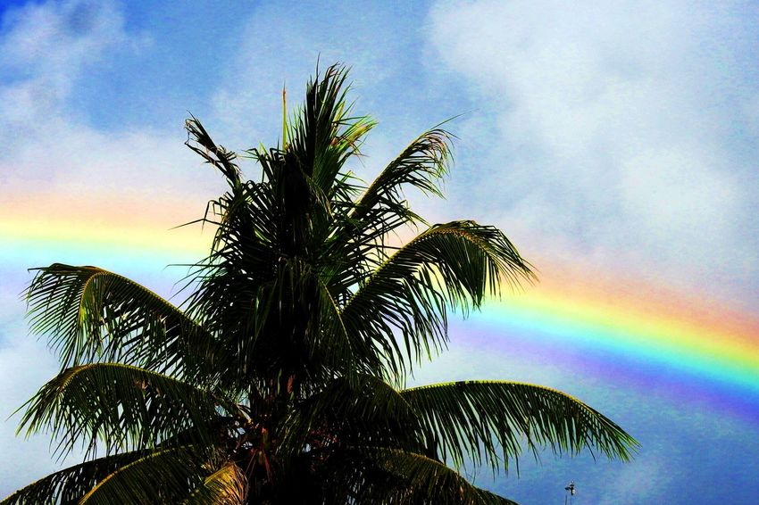 Sky Cloud - Sky Tree Plant Beauty In Nature Nature Low Angle View No People Growth Rainbow Tranquility Scenics - Nature Outdoors Palm Tree Sunset Day Tropical Climate Leaf Tranquil Scene Purple