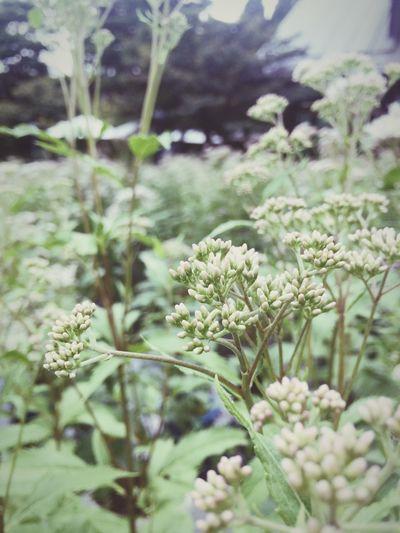 Flower Beauty In Nature Blooming Nature Japaneseflowers