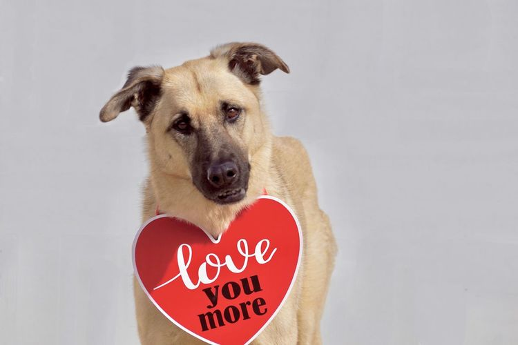 Close-up portrait of dog with heart shape decoration and text