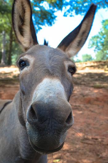 Close-up portrait of horse