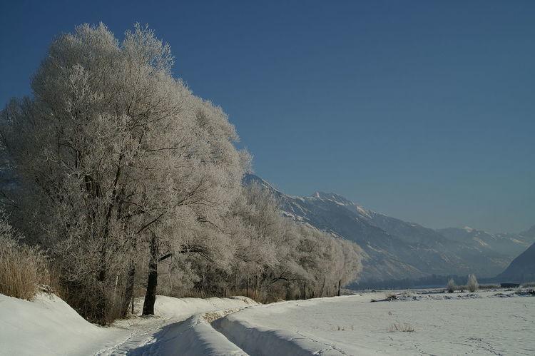 Schweiz Schweizer Alpen Switzerland Wallis Leuk Baum Weg Feld Winter Wintertime Winter Wonderland Winter Trees Beauty In Nature Nature Landscape Mountain Sky Tranquil Scene Kalt Cold Cold Temperature