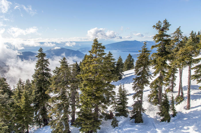 Snow Day on Cypress Mountain Landscape_Collection Nature Trees Vancouver Beauty In Nature British Columbia Canada Cold Temperature Day Forest Growth Landscape Landscape_photography Mountain Nature No People Outdoors Pine Tree Scenics Sky Snow Tranquil Scene Tranquility Tree Winter