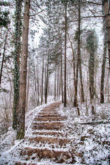 Dirt road along trees in winter