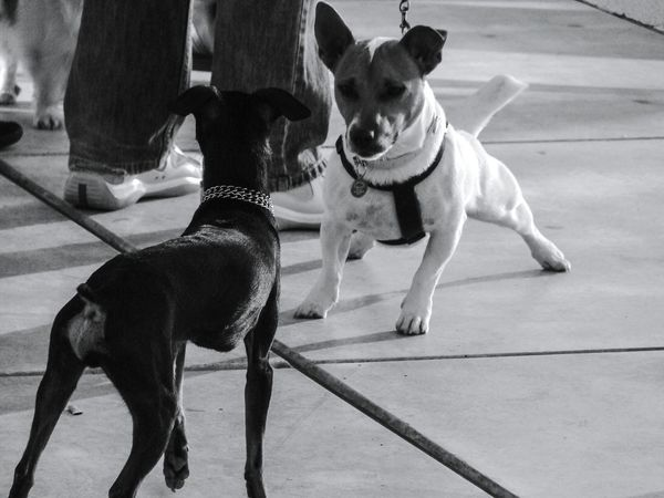 Pets Domestic Animals Dog Dogs Dogslife One Animal No People Outdoors Day Close-up Blackandwhite Black And White Blackandwhite Photography Black And White Photography