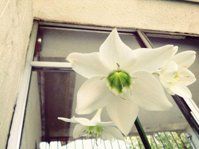 Flor D Mi Jardin