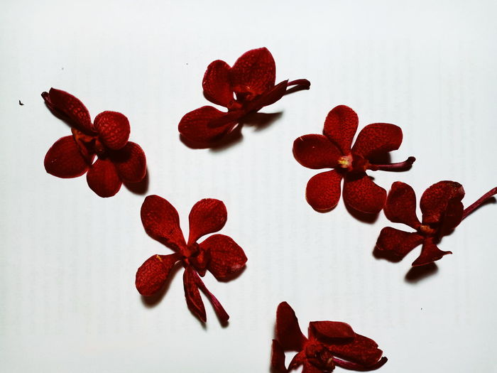 Close-up of red heart shape on table against white background