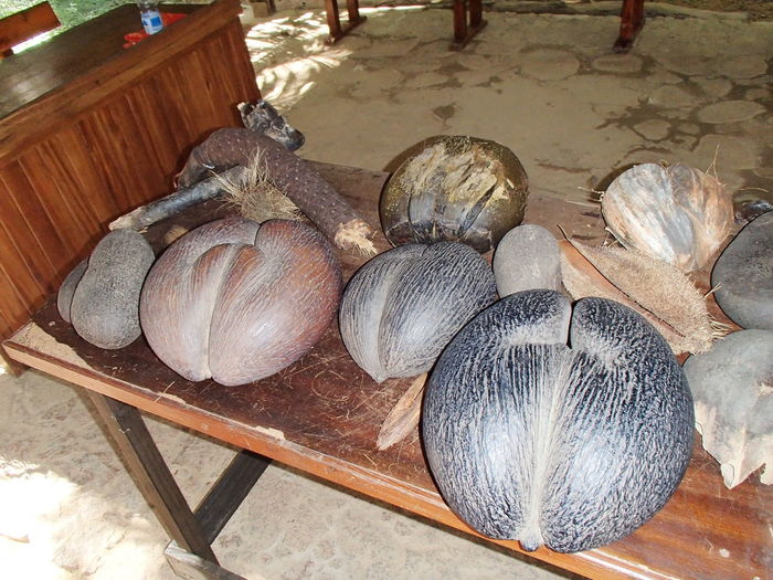 Trip in Les Seychelles Coco Fesse Group Of Objects No People Outdoors Sea Coconut Seychelles Tourism Variation