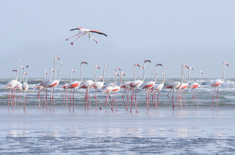 Flamingoes At Sea Against Sky