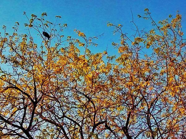 Tree Tree Photography Tree_collection  Tree View Bird Bird On The Tree Bird On A Tree Bird On Tree Bird And Tree Tree And Bird Nature Nature Photography Nature Collection Colorful Nature Nature Color Color Of Nature Beauty Of Nature
