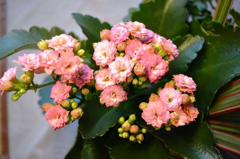 Plant Pink Color Outdoors No People Nature Leaf Growth Freshness Fragility Flower Head Flower Day Beauty In Nature