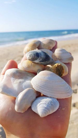 Sea Shells 🙏🏻 Seashells Seashell Seashell, By The Sea Shore Seashells, Sand And Water Relaxing