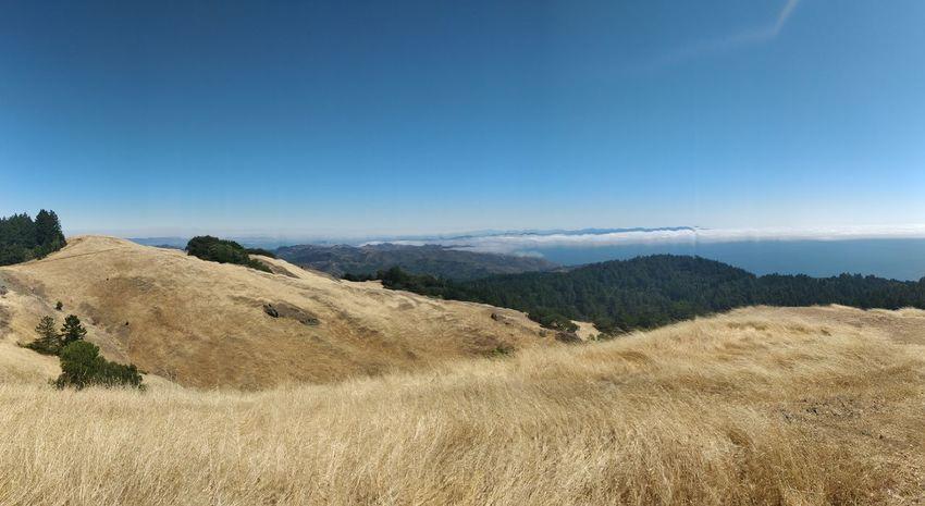Bluesky San Francisco Highaltitude Mount Tamalpais California EyeEm Selects Tree Hill Sky Landscape