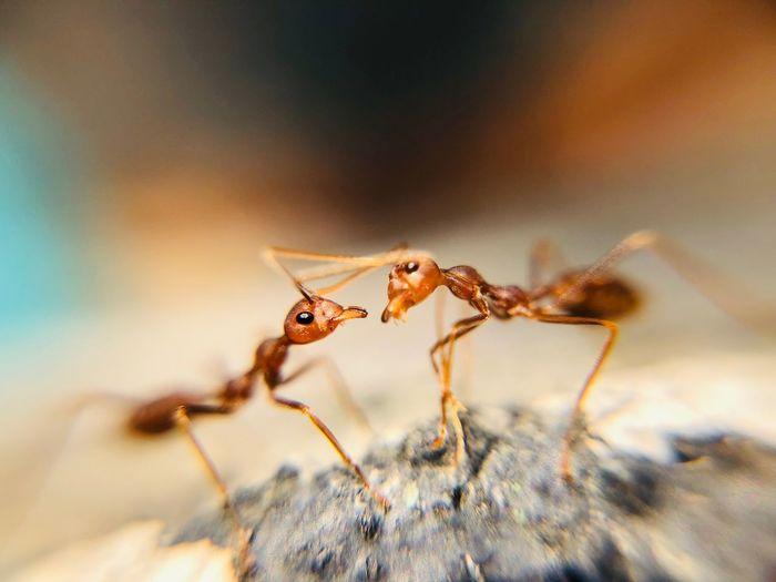 Animal Themes Animal Wildlife Animals In The Wild Animal Insect Invertebrate One Animal