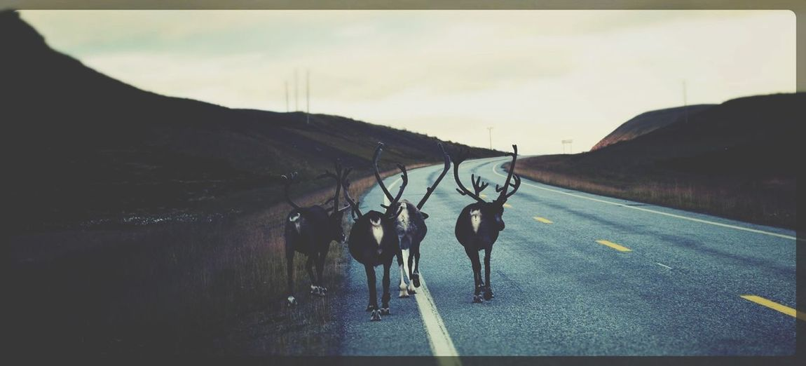 The Street Photographer - 2014 EyeEm Awards Reindeers Street Photography Check This Out