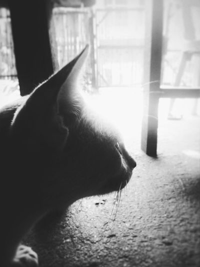 deep thoughts.. Window Close-up Cat Domestic Cat At Home Domestic Animals Pets Whisker EyeEmNewHere
