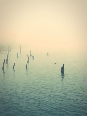 A foggy Fall Morning when the fog you got up to shoot turns into chasing MorningDewdrops LakeErie Detroitriver WaterLovers DesolateDock WaterRuins Serene Beautiful Eerie SouthfieldRd