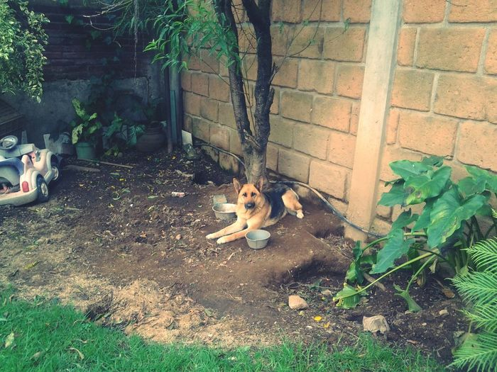 Mi hermosa Queen :3♥ Dog Nature Cute Pets I Love My Dog