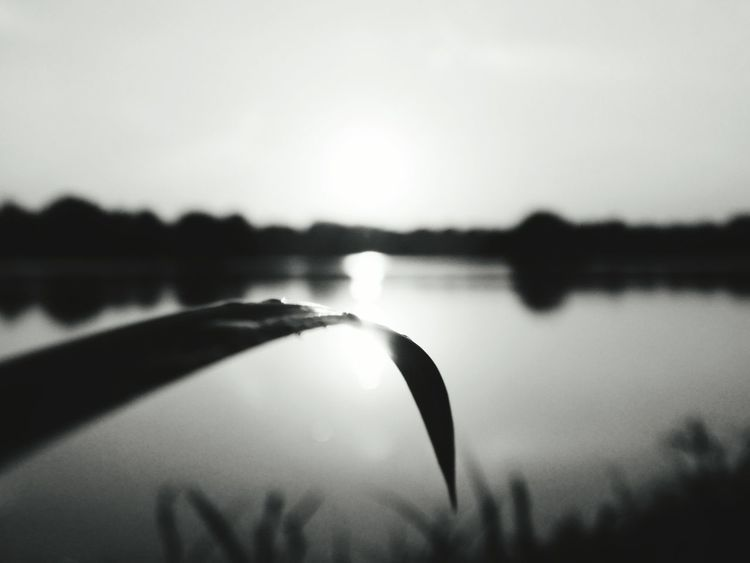Monochrome Photography Nature Beauty In Nature Water Sun Nature_collection New Talent Maybe? Sunset Tranquil Scene Selective Focus No People Popular On Eyeem The Great Outdoors - 2017 EyeEm Awards
